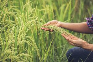 poljedeljstvo