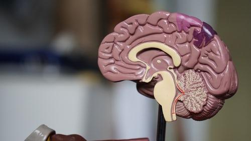 Možganska telovadba vaje je iskalni niz za urjenje možganov